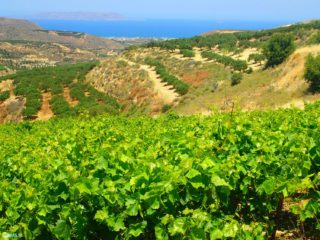 Fly drive holidays Crete