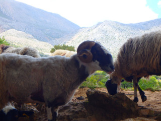 Walking on Crete - Hiking, Greece 2016