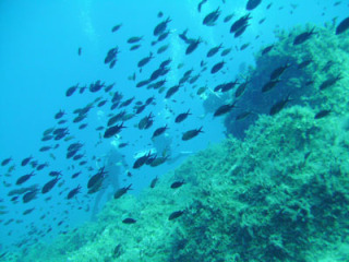 diving-holiday-in-crete-gre