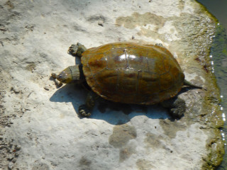 06-turtle-greece-238904238402