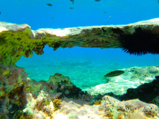 02-Crete-Snorkelling,-tips-for-snorkelling-in-Crete-and-Greece