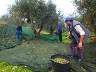 03-olive-oil-producers-in-crete
