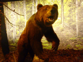 05-Natural-History-Museum-of-Crete-greece