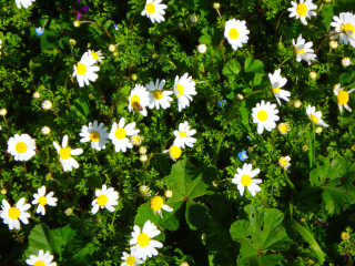11-flowers-from-crete