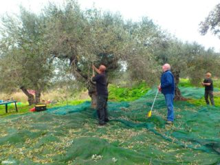 Olive oil from Crete