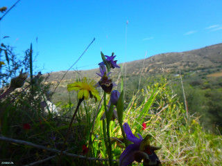 Flowers-of-Crete-Day-Trips
