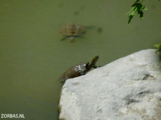 turtles-in-Crete-Greece