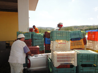 050913-wine-mailing-in-crete-greece