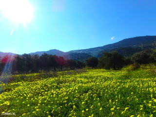 03-Discover-crete-by-feed