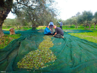 01-winter-with-olive-harvest-in-Crete-Greece