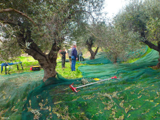 02-olive-oil-producers-in-Crete