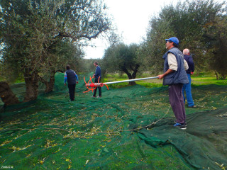 02-olive-oil-production-in-Crete