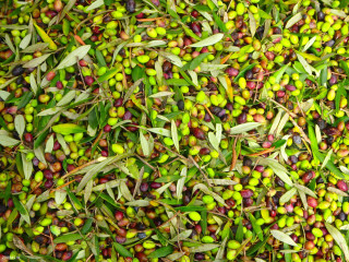 03-zorbas-olive-oil-from-Crete-Greece