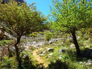 04-hiking-ín-kreta-havgas-is-een-wandel-kloof-2290