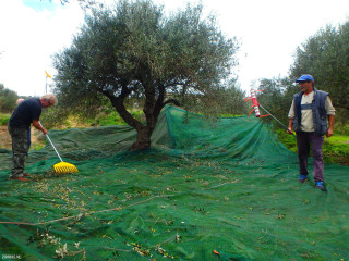 04-olive-oil-sales-in-Crete