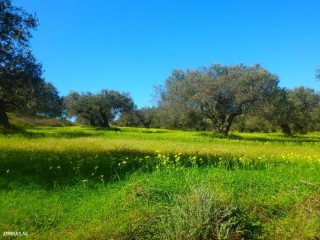 walking-in-crete-in-the-spring