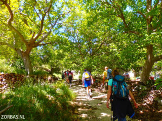 selakano-walking-al-over-crete
