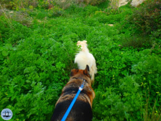 04-hiking-in-crete-for-a-week-263